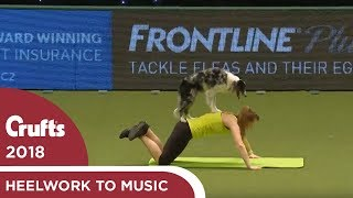 Download Dog gets a workout during Heelwork to Music | Crufts 2018 Video
