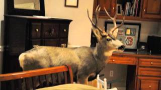 Download Deer crashes into home on Christmas Eve! Video