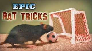 Download Epic Rat Tricks Video