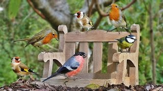 Download Video for Cats to Watch : Garden Birds at The Tiny Bench NEW Video