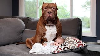 Download Dogs protecting Babies when Babies is in danger - Dog and Babies Are Best Friend Video