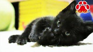 Download 親とはぐれ一匹でいた 野良子猫を保護した【瀬戸の黒猫日記】 Video