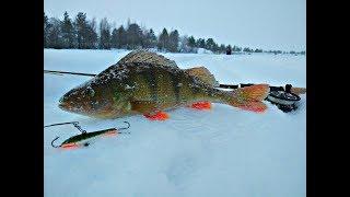 Download Окунь Нельма на балансир Подледная рыбалка Северная Двина 18.02.18 Video