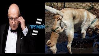 Download Эхо из задницы генпрокурора Украины (обзор на ток-шоу Ганапольского) Video