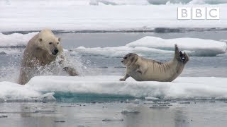Download Hungry polar bear surprises a seal - The Hunt: Episode 2 Preview - BBC One Video
