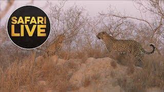 Download safariLIVE - Sunset Safari - August 15, 2018 Video