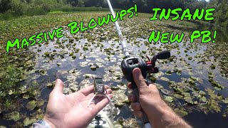Download MASSIVE Topwater blowup, INSANE New PB (Not a Bass) | B Fishing | Video