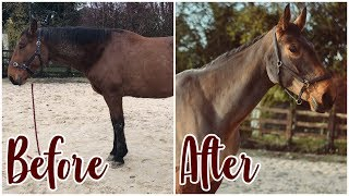 Download HUGE HORSE MAKEOVER // Washing, Clipping, Pulling mane Video