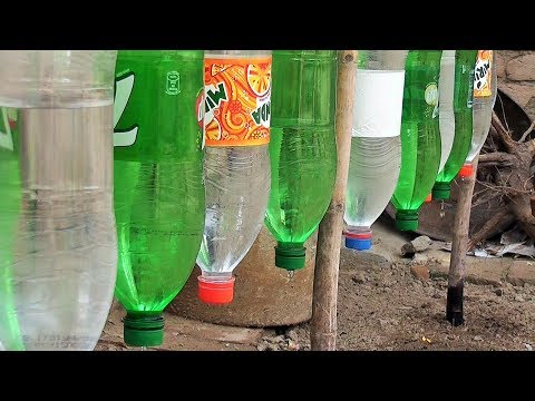 Plastic Bottle Drip Water Irrigation System Very Simple