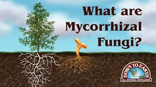 Download What Are Mycos? Down To Earth Fertilizers Video