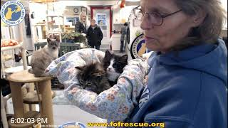 Download Adoption of Teddy Bear and Thamba 01/08/2020 Friends of Felines Rescue Center (FFRC) Video