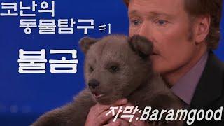 Download 코난 오브라이언의 동물탐구 #1 - 아기 불곰 (동물 전문가 데이빗 미제쥬스키) in 코난쇼 Video