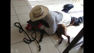 Download Fighting Pit Bulls in Miami Part 1- Dog Whisperer BIG CHUCK MCBRIDE vs. Cesar Video