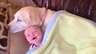 Download Los bebés lindos que juegan con los perros Labrador - Perros Amor bebés Compilación [HD VIDEO] Video