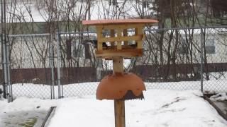 Download Dove Proofing My Backyard Bird Feeder Video