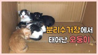 Download 도와달라는 어미냥이와 새끼고양이 오둥이 결국 구조했습니다 Video