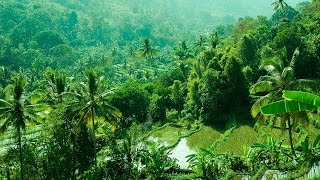 Download Lovina, Bali : Welcome to the Undiscovered Part of Bali! Video