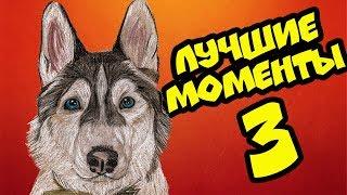 Download ХАСКИ БАНДИТ ЛУЧШИЕ МОМЕНТЫ ЧАСТЬ 3 (Хаски Бандит) Говорящая собака Video