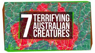 Download 7 of Australia's Most Terrifying Inhabitants Video
