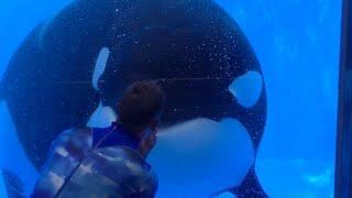 Download One Ocean Featuring Tilikum & Malia - Aug 13 2016 - SeaWorld Orlando Video