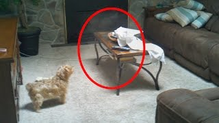 Download 5 Creepy Times Pets Were Seeing Things Their Owners Couldn't! Video