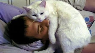 Download CUTE CATS MORNING CALL THEIR OWNER | Top Funny Cat Compilation Video