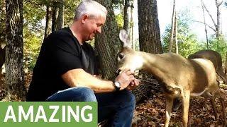 Download Wild deer go crazy for apples Video