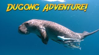Download Dugongs of the Philippines | JONATHAN BIRD'S BLUE WORLD Video