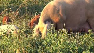Download Berea College Farm Video