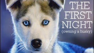 Download The First Night Owning A Husky Puppy... Video