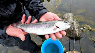 Download Bass Fishing with LIVE Trout!!! (GIANT Bites) Video