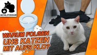 Download 🔥Warum folgen uns Katzen aufs Klo? | Lustiges Katzenverhalten Video