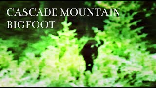 Download Dad Films Sasquatch In The Cascade Mountains Video