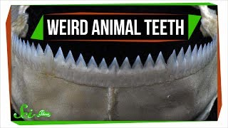 Download 7 Animals with Super Weird (and Sometimes Horrifying) Teeth Video
