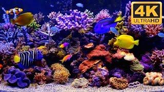Download ***** THE BEST 4K Aquarium Video ***** Video