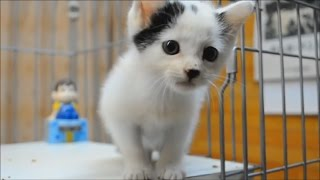 Download ♥ Kittens CUTE Kittens video compilation ♥ Video