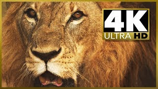 Download 4K ULTRA HD TEST, short movie demo Video