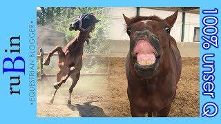 Download 100% Q | 6 Monate mit einem Jungpferd | Outtakes! Video