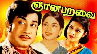 Download Gnana Paravai (ஞான பறவை)   Sivaji Ganesan & Sasikala   சிவாஜி கணேசன் - சசிகலா   விஸ்வநாதன் Hits Video
