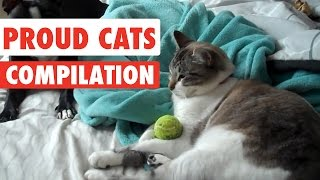 Download Proud Cats Video Compilation 2017 Video