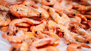 Download Rachael Ray's Shrimp Stock Video