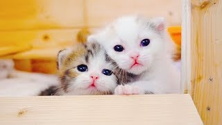 Download 企图越狱的小猫咪姐妹花真是萌化了,快来吸奶猫吧! Video