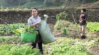 Download 摘了满满一篮子和一袋蔬菜,回娘家送菜,你见过吗? Video
