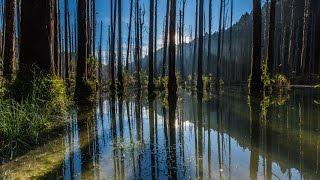 Download 忘憂吧! 森林~ 水漾森林縮時攝影-4K Video