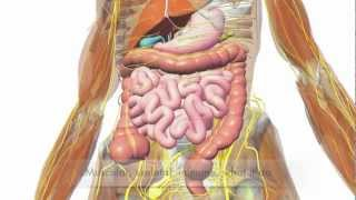 Download So Many Systems - Human Body Systems Rap Video