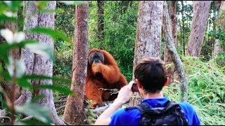 Download A HUGE orangutan interrupted our trek [Sumatra Jungle Trek DAY 2] Video