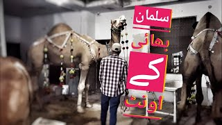 Download Camel for Qurbani Eid 2018 in Lahore - Samanabad - Camel Qurbani 2018 - Heavy Camels Qurbani Video