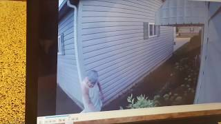 Download Crazy Neighbor! Vandalizing in her nightgown caught by surveillance camera Video