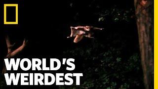 Download Flying Squirrel | World's Weirdest Video