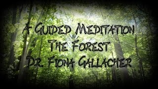 Download GUIDED VISUALIZATION - A WALK IN THE FOREST - DR. FIONA GALLACHER Video